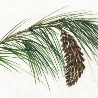Botaniske vintermotiver, A4 tryk